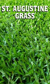 Houston Garden Centers Order Online Fresh St Augustine Grass