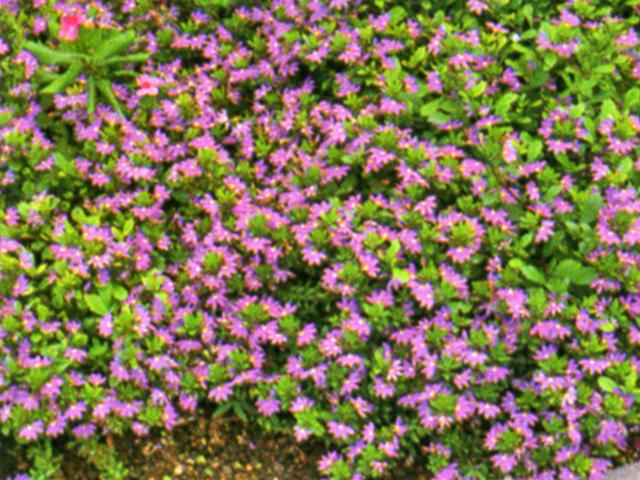 Houston garden centers what to plant now mightylinksfo